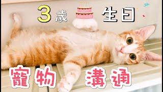 寵物溝通~Uni 三歲生日傲嬌爸的養貓日常