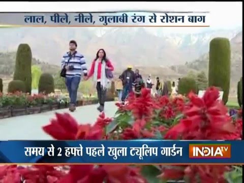 Asia's Largest Tulip Garden in Full Glory Open to Tourists in Kashmir