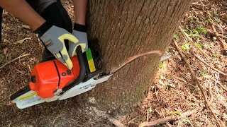 Video How to Fell a Tree with a Chainsaw download MP3, 3GP, MP4, WEBM, AVI, FLV November 2017