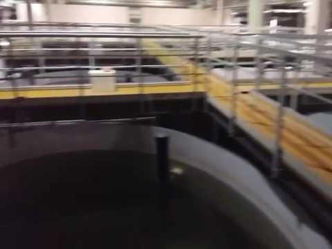 A high tech  fish farm in dubai  uses 200 tons of  fiberglass