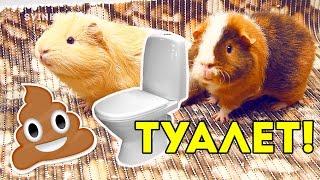 Приучаем Морскую Свинку к Туалету / SvinkiShow