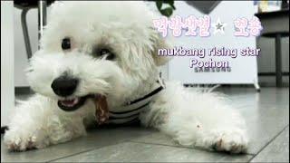 DOG EATING ASMR )강아지먹방 ASMR 아기…