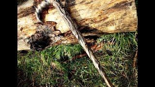 Резная  трость (посох) своими руками. Резьба по дереву.wooden carving, orthopedic cane DIY