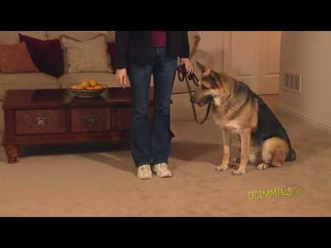 how-to-teach-your-dog-the-leave-it-command-for-dummies