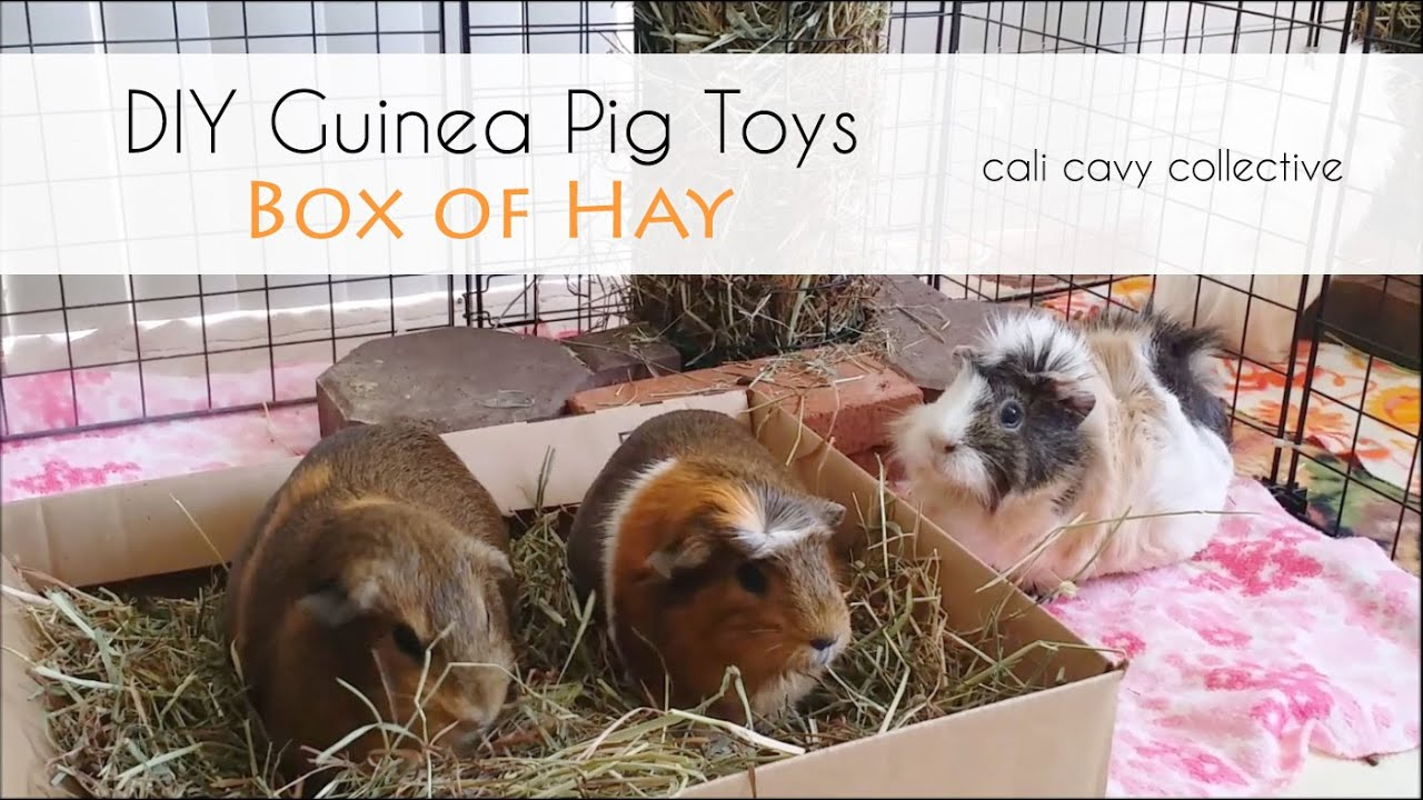Diy guinea pig toys box of hay youtube for How to build a guinea pig house