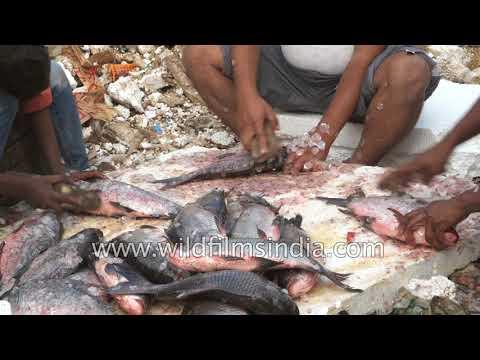 SG 166 Fish Mandi Hajipur 7