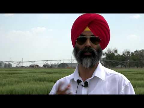 Spring Wheat Breeds In Western Canada - Farming Smarter