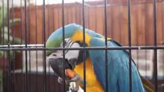 Мир больших попугаев и певчих птиц. Коллекция птиц. Выставка попугаев. Parrots