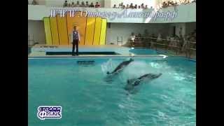Дельфинарий В Геленджике.  Гостиница в Геленджике
