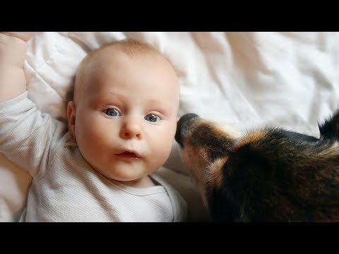 Dogs Meeting Babies for the First Time Compilation 2015
