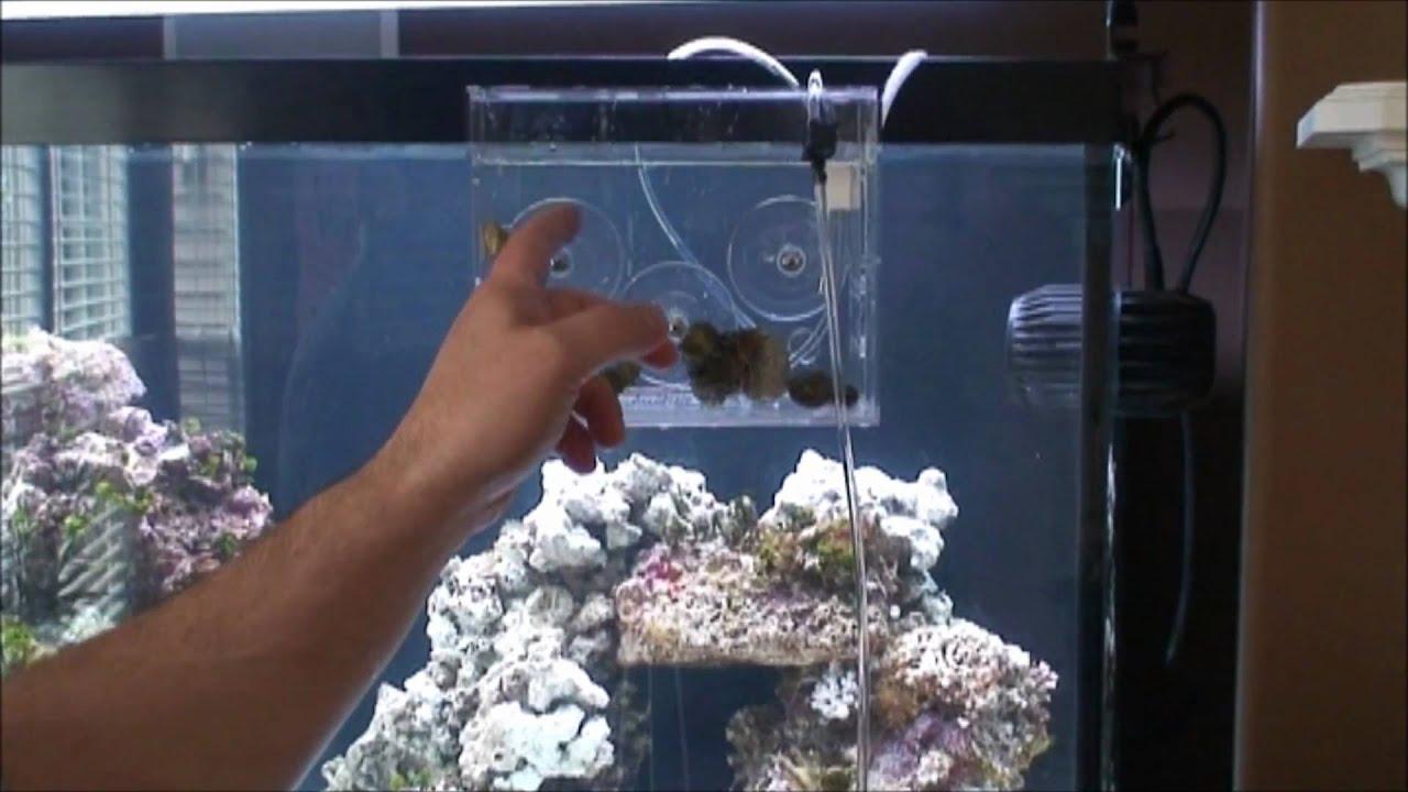 Freshwater fish acclimation - Freshwater Fish Acclimation