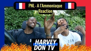 PNL - A l'Ammoniaque [English Translation] Reaction @HarveyDonTV