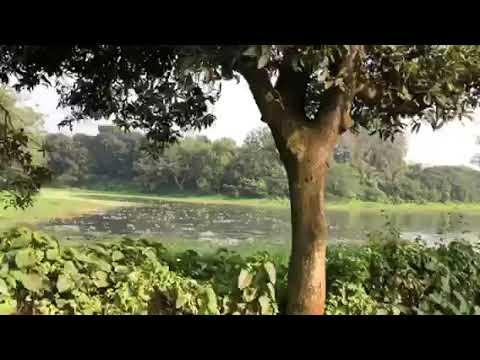 SAVAR UPAZILA DHAKA BANGLADESH 03-12-2019