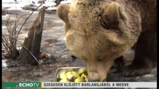 Előjött barlangjából a medve - Echo Tv