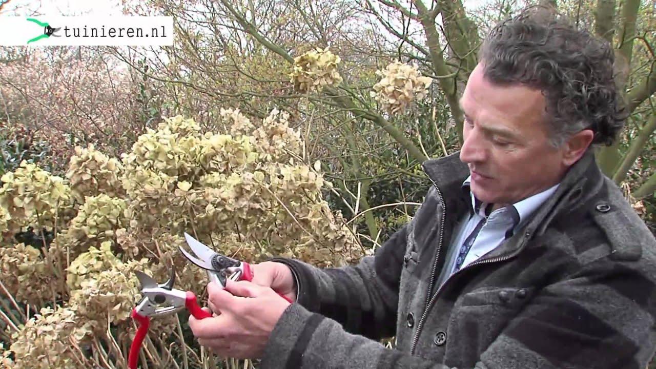 Hoe kun je een hortensia snoeien youtube for Tuin snoeien