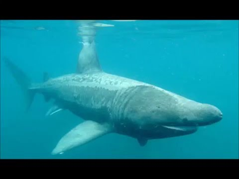 Basking Shark Movie Colton and Dominic