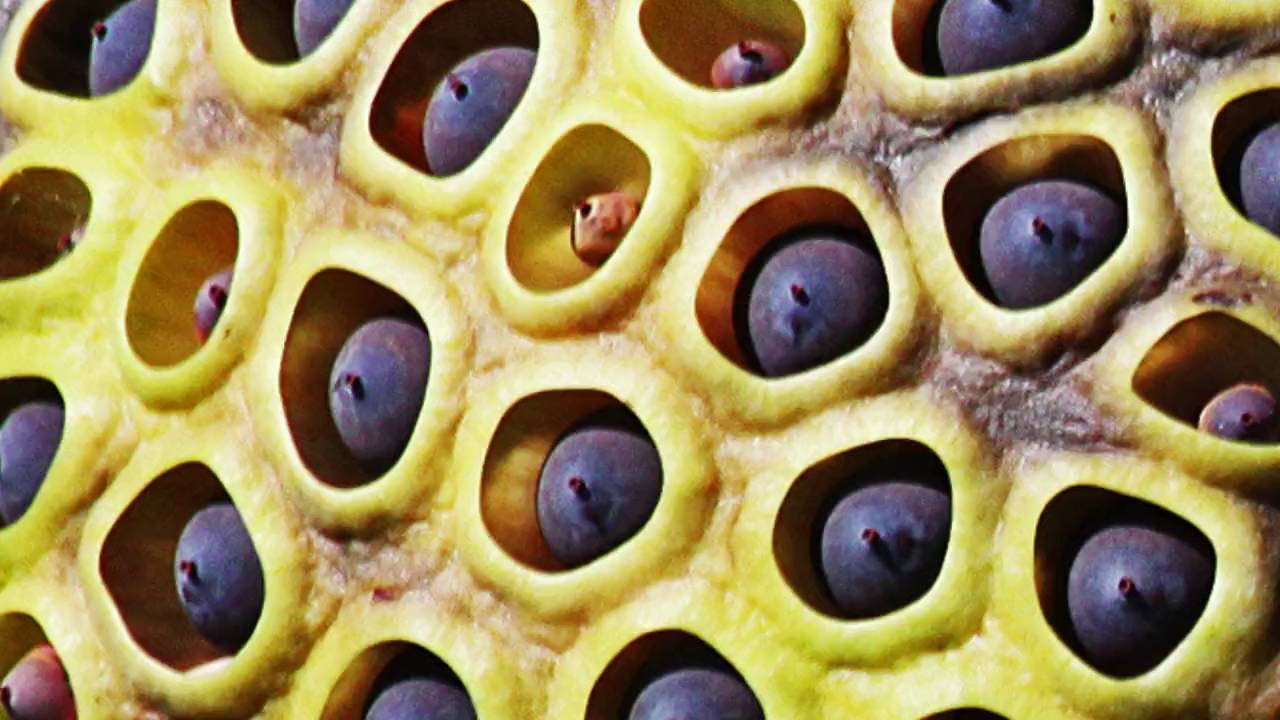 Fear Of Holes Take The Trypophobia Test Youtube