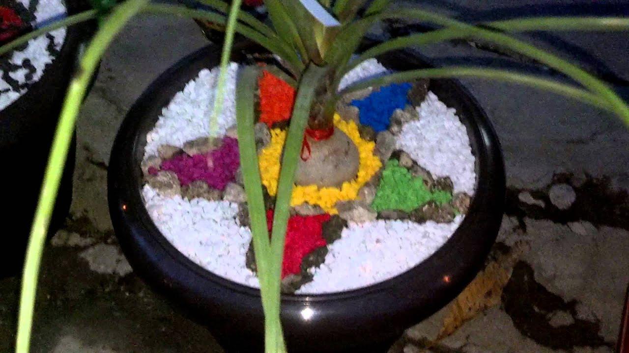 decoraciones de plantas de ornato youtube