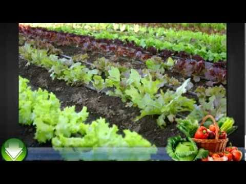 Beau Vegetable Gardening For Beginners   Some Basic Tips
