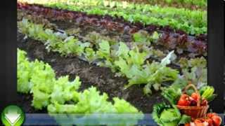 Vegetable Gardening for Beginners - Some Basic Tips
