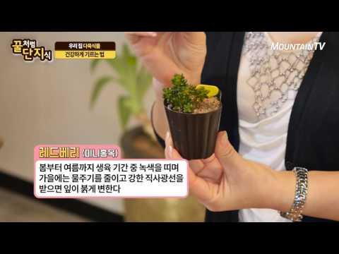 다육식물 물주기, 쉽게 하는 방법 아시나요?  