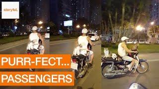 定員数あわなくなりそう!ベトナム・ハノイ名物猫バイク