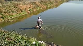 Ловля дафнии. Живой корм для аквариумных рыб.