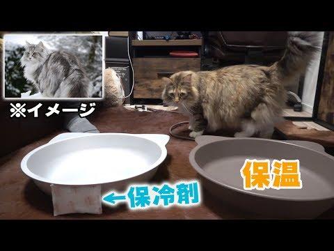 【予想外】ノルウェーの猫は冬でも冷たい鍋に入るの?
