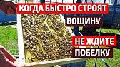 Эспарце́т (лат. Onobrýchis) — род растений из семейства бобовые. Известно до 150 видов, дико растущих в средней и южной европе, в северной африке и в западной азии. Это — травы, полукустарники или мелкие кустарники,