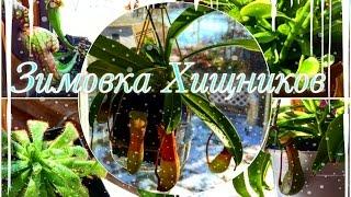 Зимовка Хищных Растений(This video is about Corvallis Plants during winter. В этом видео я расскажу как себя чувствуют мои растения хищники зимой. Это..., 2016-01-21T18:21:05.000Z)