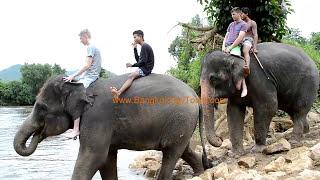 Elephant Bathe Tour with BangkokDayTours (Original only by BangkokDayTours Ltd.!)