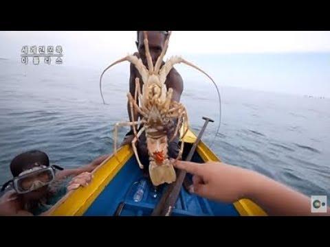 세계 최고의 바다 사냥꾼 바자우 족의 닭새우잡이!