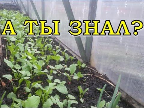 видео: Санитарная обработка ТЕПЛИЦЫ весной