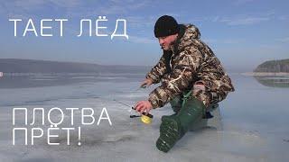 ТАЕТ ЛЁД ПЛОТВА ПРЁТ Печенежское водохранилище 2021