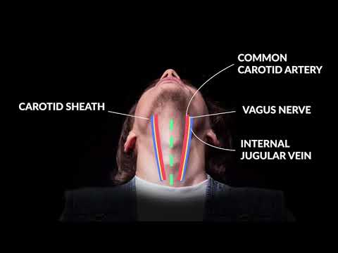How to Perform An Emergent Cricothyrotomy: Emergency Medicine -- Your Design Medical