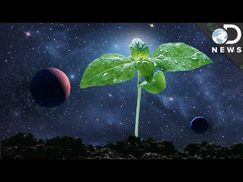 How Astronauts Grow Plants In Space