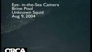 Deep-sea squid discovery