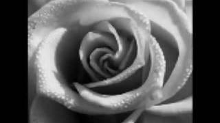 Interlude - My Chemical Romance