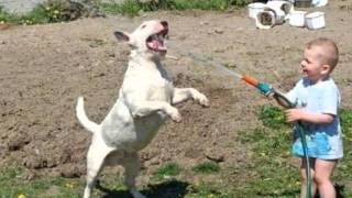 Crazy Love - Bull Terrier