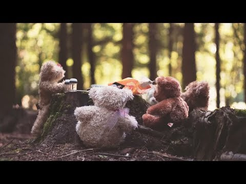 Teddy Bears Picnic | If you go down to the wood's today (Bing Crosby)