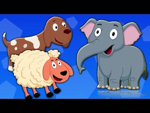 Самые смешные приколы про животных 2015 года