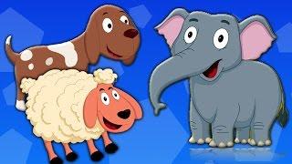 животных Звуковая песня | Детские рифмы | узнать животных | Rhyme For Kids | Animal Sound Song