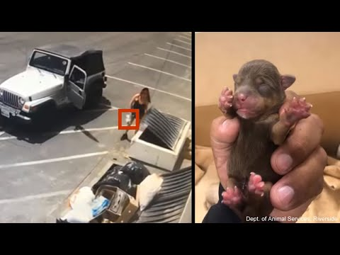 Paul - DISGUSTING: Woman Throws 7 Puppies In Dumpster On 90 Degree Day