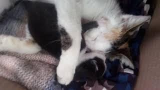 Annesine sarılan yavru kedi