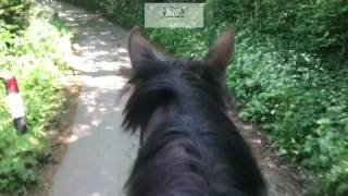 Overcoming napping in horses