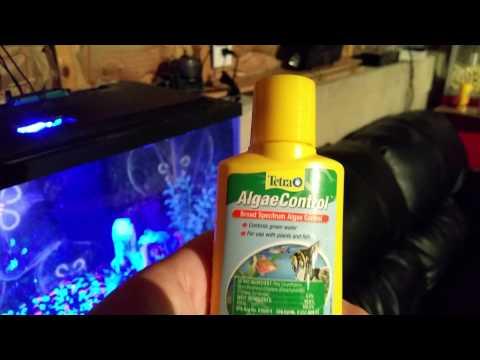 10 Gallon Glofish Aquarium: Beginner Essentials