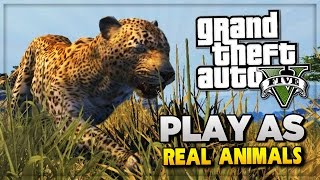 One of iCrazyTeddy's most viewed videos: GTA 5 PS4 Next Gen - Play As Animals! GTA 5 Easter Eggs Tutorial & Peyote Locations (GTA V)