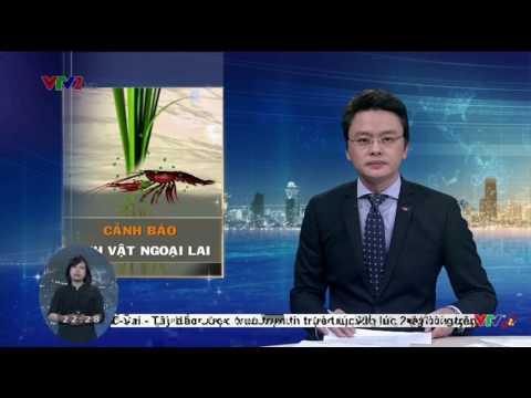 VTV2 Chất Lượng Cao   Xem Kênh VTV2 Miến Phí Trực Tuyến Trực Tuyến, Miễn Phí   Cốc Cốc 08 02 2017 10