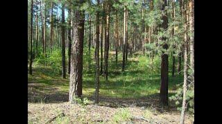 В лес за фитонцидами