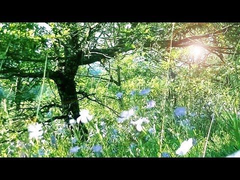 Merveilleuse musique angélique et nature paradisiaque - fleurs, forêt, arbres, anges (F. Amathy)